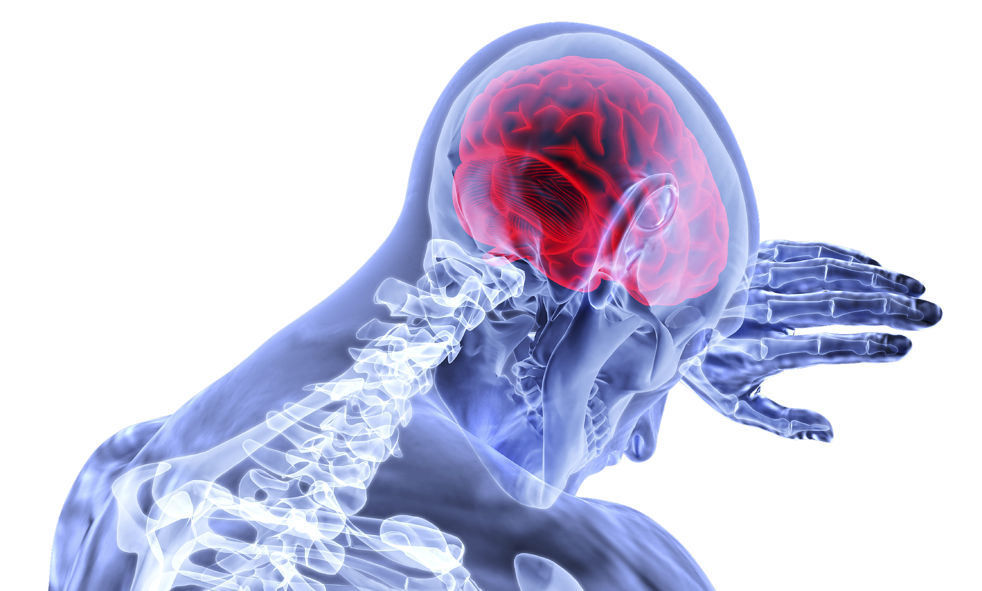 Stimulate, Image and Explore – What Does Pain Look Like in the Brain?