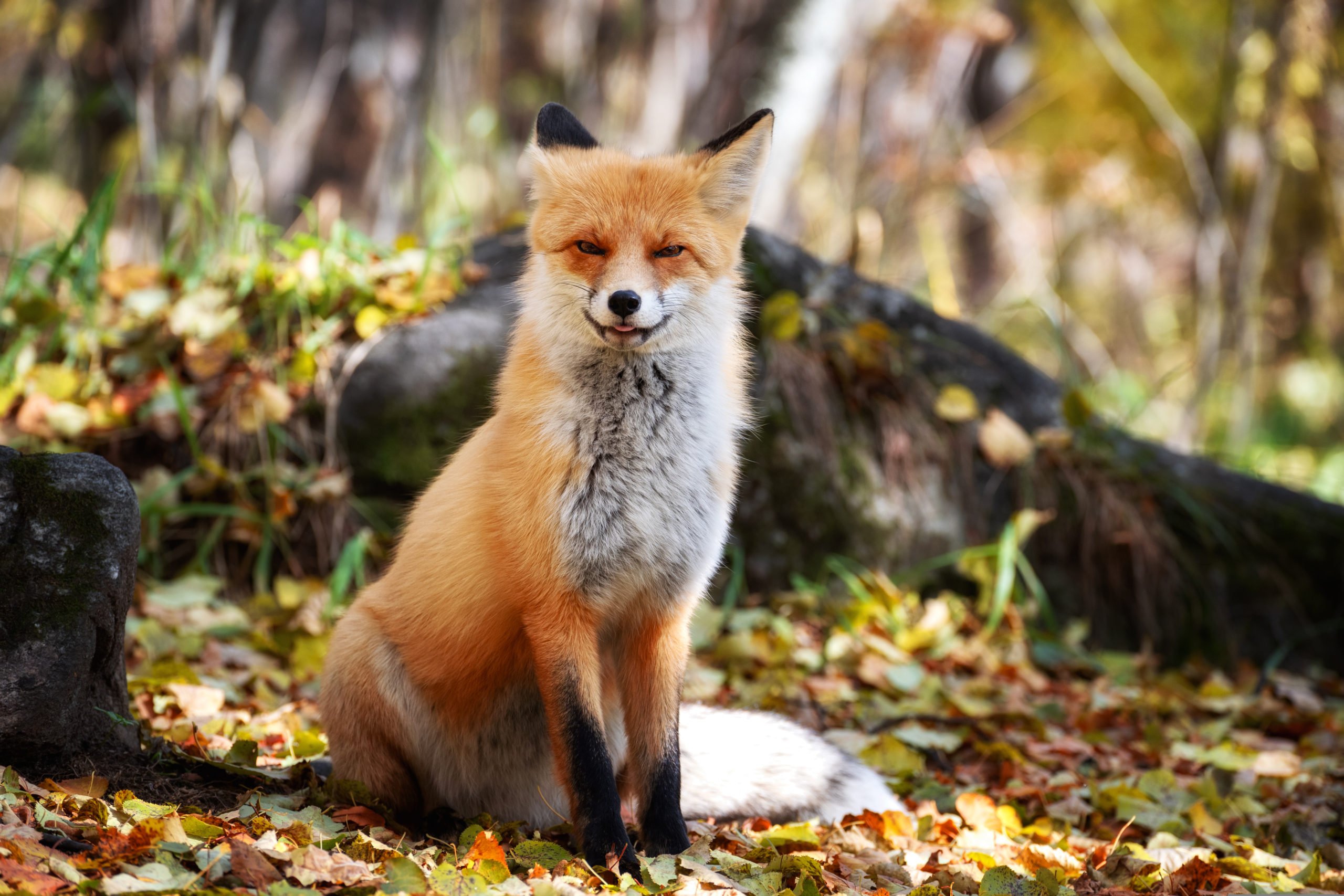 What Does the Fox Say – Nature Trail & Photography Competition